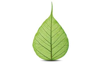 Prodotti green
